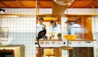 Osaka'da odalardan kedileri izleyebileceğiniz oteller açıldı